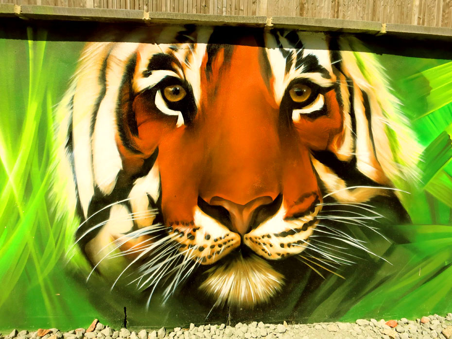 graffiti-tiger