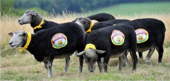 Marmite graffiti sheep